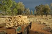 Begonia Farmstay
