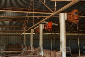 inside the shearing shed at Begonia