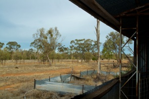 looking out of the shearing shed at Begonia
