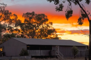 the old shearing shed at begonia