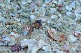 Jar Island crabs & coral