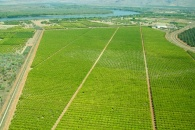 Ord River Irrigation