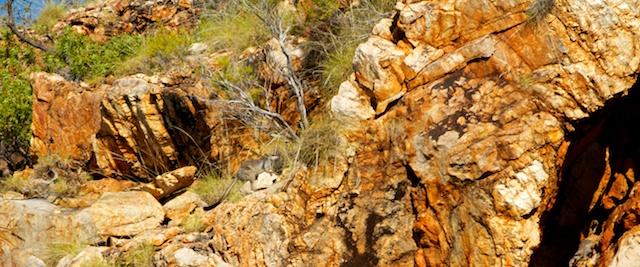 Talbot Bay & rock wallaby
