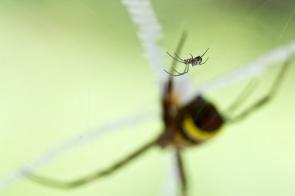 st andrews cross spider + squatter