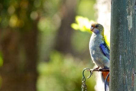 a real bird in the garden