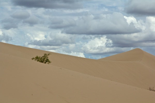 mobile sand dune Mungo NP