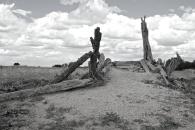 stock ramp - Zanci ruins Mungo NP
