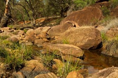 Mulareenya Creek Gundabooka NP