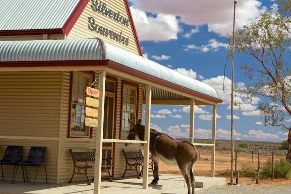 Silverton donkey