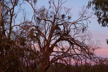 sunrise through the trees at Warrawong on the Darling