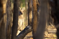 wildlife at Warrawong