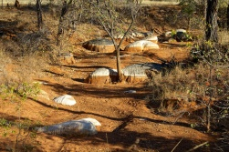 creek bed in Chillagoe