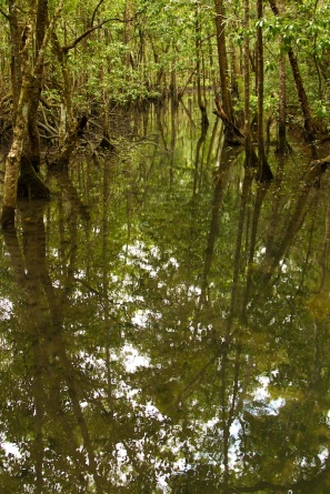 reflections in the Daintree