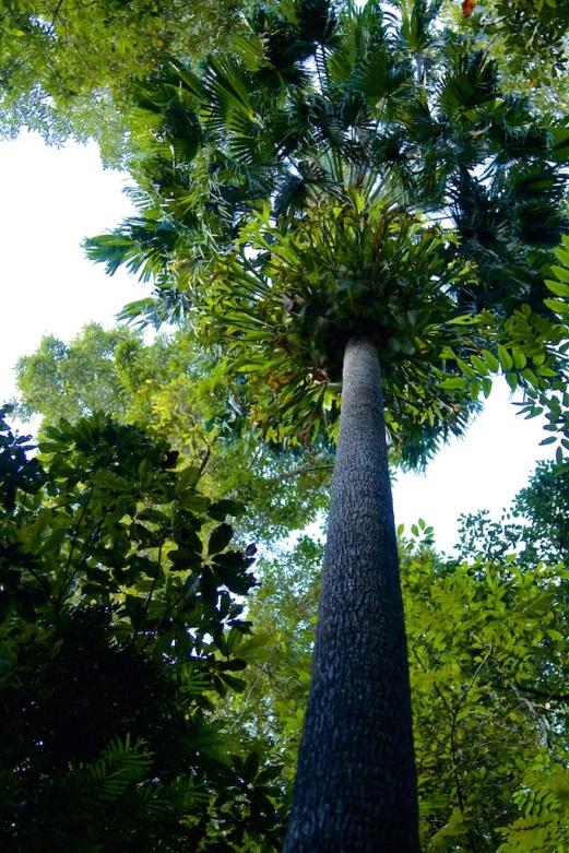 Eungella NP forest walk