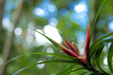 flower in the Eungella forest