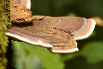 forest fungi Paluma Range