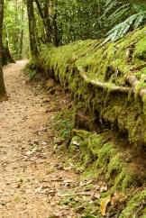 forest log Paluma Range