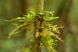 growth in the Paluma forest