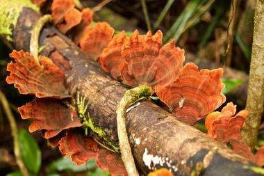 orange funghi Paluma Range