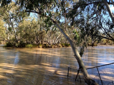 Moonie River, Nindigully