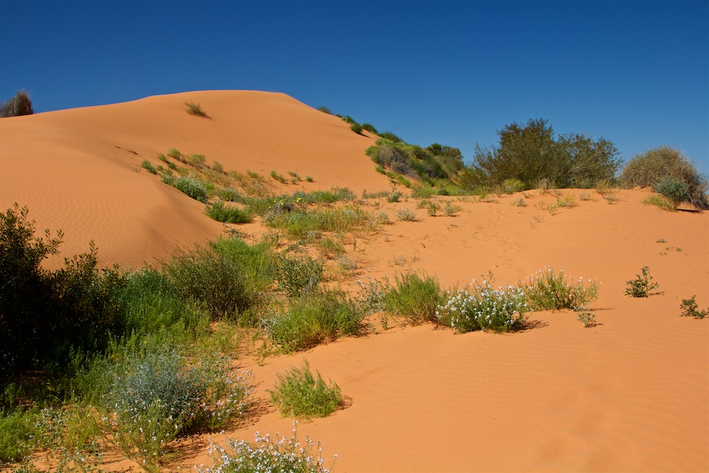 The Western Queensland Desert Blooms Lateral Horizons