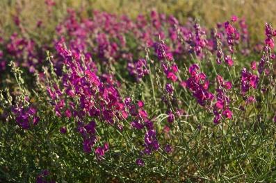 flowers-at-noccumdra