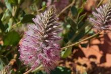 the-desert-blooms
