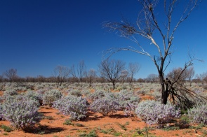 the-desert-south-of-quilpie-queensland